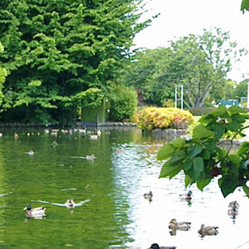 https://www.parklink.nz/wp-content/uploads/2016/07/parklink-cornwall-park-pond-feature.jpg