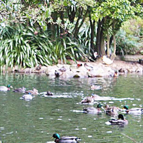 https://www.parklink.nz/wp-content/uploads/2016/07/parklink-williams-park-pond-feature.jpg